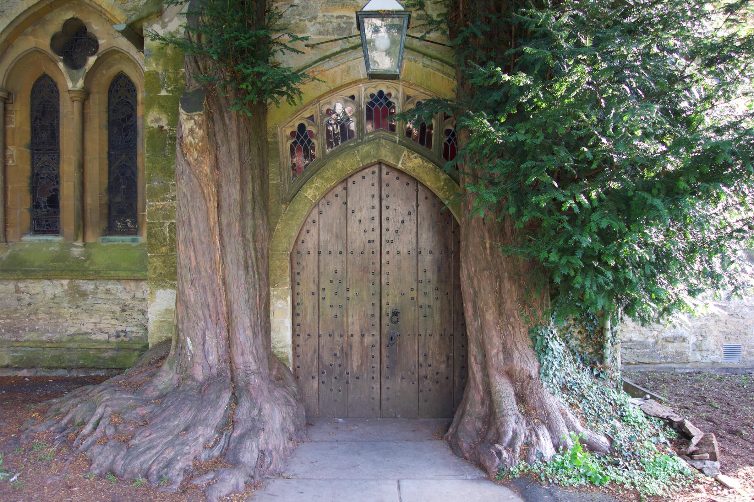 イチイの木に挟まれたドア